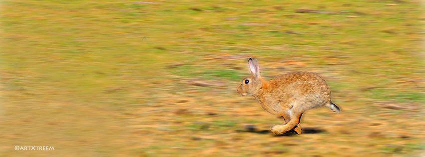 c0004-Rabbit Running
