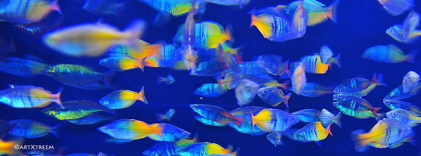 c0005-A Big Fish Bowl