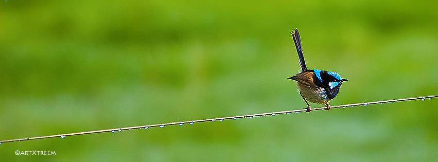 c0028-Wren on A Wire