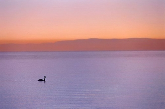 o0028-Morning Swan