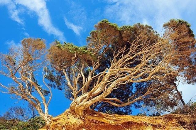 o0005-Battered Tree