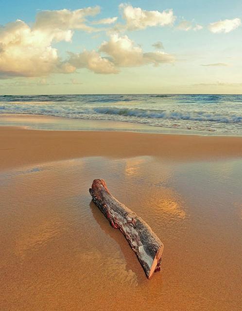 o0020-Log on the Sand